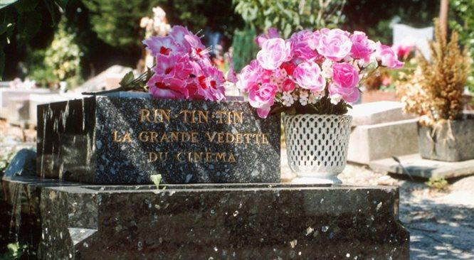 Rin Tin Tin - o psie, który został... gwiazdorem