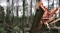 Wycinka drzew, czyli największe szwedzkie samobójstwo