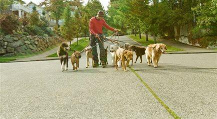 Dog walker - praca, ale nie dla wszystkich