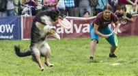 Psie zawody Dog Chow Disc Cup 2014