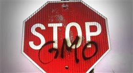 GMO w Europie: można zakazać, ale są luki