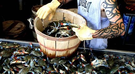 Najniebezpieczniejszy zawód świata - poławiacz krabów
