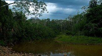 Prawdziwe życie w boliwijskiej dżungli