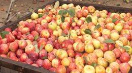 Rosja  będzie kontrolować żywność z Białorusi. Podejrzewa, że Mińsk odprawiał do Rosji unijne jabłka