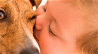 Chociaż liczba ras psich wielka, nas urzeka wdzięk kundelka