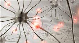 Kolce w głowie człowieka. Odkrywamy tajemnice mózgu