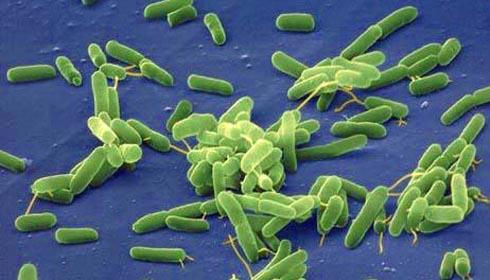Bakterie foto źr flickr cesar harada lic cc