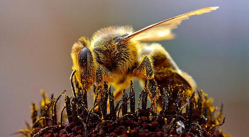 Dramat pszczół dramatem człowieka