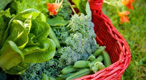 Tańsze warzywa i owoce dla tych, którzy zbiorą je sami?