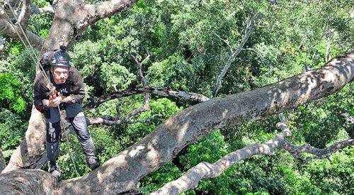 Amazonia, 70-metrowe drzewa, liny i dwójka Polaków