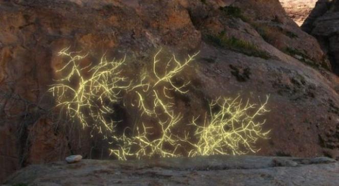 krzew gorejący na Górze Synaj
