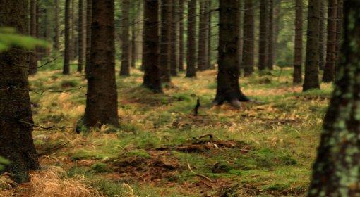 Dotacje do zalesień