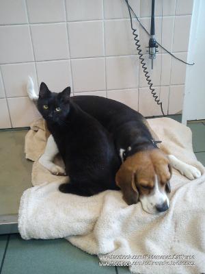 Kot Rademenes pomaga zwierzętom bez względu na rasę/Schronisko w Bydgoszczy