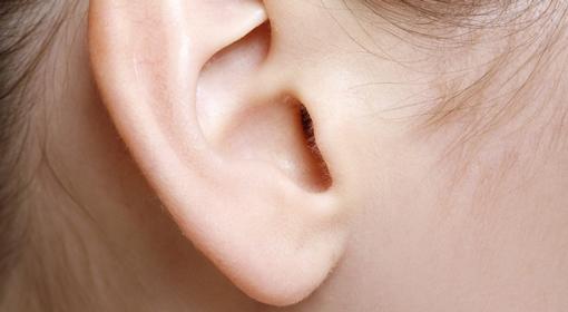 Wyhodowali sztuczne ucho. Rosło trzy miesiące