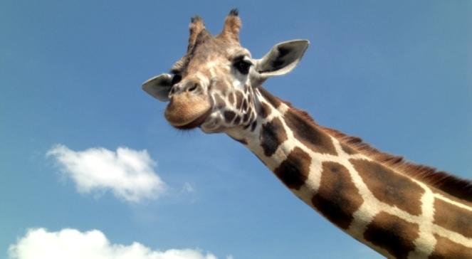 Pamiętajmy, że w zoo mieszkają dzikie zwierzęta