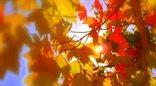 Rozpoczyna się jesień